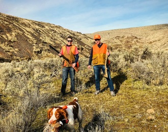 bird dog hunting pheasants