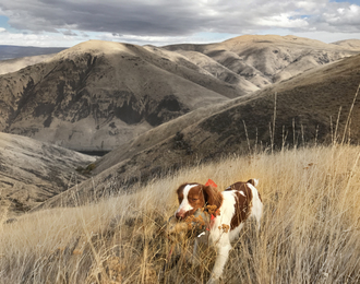 chukar hunting in central washington upland dog